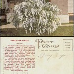 A salesman's sample postcard for his merchandise (in this case, some shrubs) along with the salesman's name (H.W. Owens) on the reverse of the card.